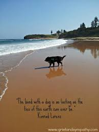 grieving loss of pet 25 best ideas about pet loss grief on pet loss dog 67252