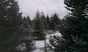 christmas trees u2013 the garden professors