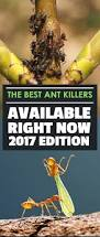 the best ant killers available right now 2017 edition