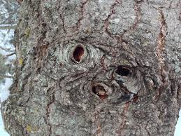 on my walk one tree three faces wrenaissance art