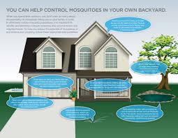 mosquito extermination safer home services mosquito control tampa