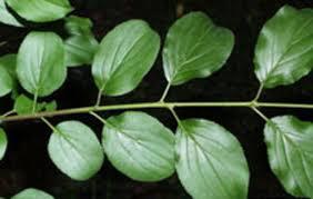 cz tip coastal plant identification common native and invasive