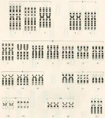 karyotype worksheet free worksheets library download and print