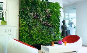 best indoor trees best office plants full size of plantoffice desk plants best