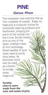 best 25 celtic druids ideas on pinterest pagan gods celtic