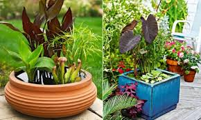 mini pond ideas for a small oasis on the balcony