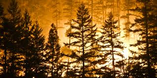 Wild Fires In Canada Bc by Claims Support For The Wildfires In British Columbia Jlt Canada