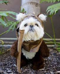 Funny Halloween Costumes Dogs 25 Ewok Dog Costume Ideas Small Dog Costumes
