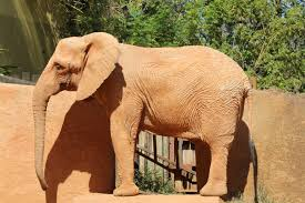 Elephant Statue Brown Elephant Statue Free Image Peakpx