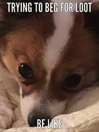 Sick Puppy Meme - daisy the meme queen wow amino