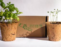 amazon com indoor herb garden kit 3 pack by earth safe