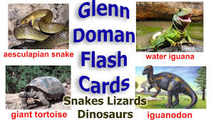baby einstein glenn doman flash cards animals amphibian snakes