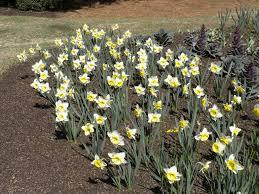 bountiful blooming bulbs u2013 moore farms botanical garden