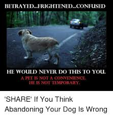 Confused Dog Meme - betrayed frightened confused he would never do this to you a pet