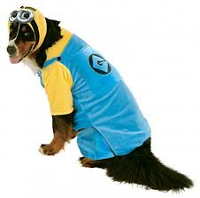Halloween Costumes Large Dogs Big Dogs Minion Dog Costume Xx Large Halloween Costumes