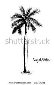 royal palm tree stock images royalty free images u0026 vectors