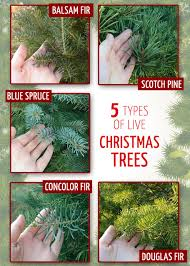 10 tips to start a christmas tree farm to make money christmas