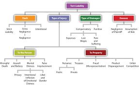 Scholarly Essay Example Cln4u Canadian And International Law Grade 12 Canadian Law Essay