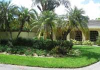 plant perfection is one of the best miami landscape companies in