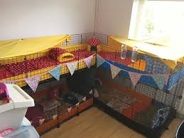 Cages For Guinea Pigs Large C U0026c Cage For Guinea Pigs In Bangor County Down Gumtree