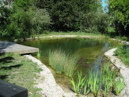 Backyard Swimming Ponds by 426 Best Swim Pond Images On Pinterest Natural Pools Natural