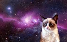 Meme Desktop Wallpaper - grumpy cat meme hd desktop wallpaper hd desktop wallpaper
