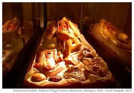 Pregnant Female Anatomy Diagram Arre Kya Baat Hai Baby In The Womb Amazing Anatomy Models