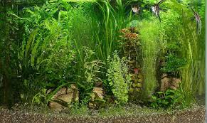 Best Substrate For Aquascaping What Is A Good Substrate For A 20 Long Low Tech Planted Aquarium