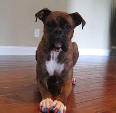 dog and hardwood floors testimonials dogs page 2