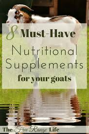 8 must have nutritional supplements for goats the free range life