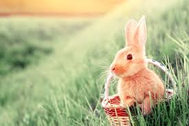 bunnies for easter why are bunnies so popular for easter reader s digest