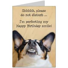 humorous birthday card the dogs daft grin greeting cards carddle