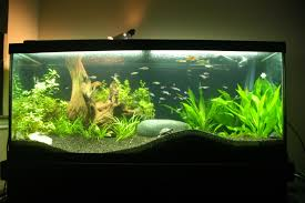 How To Aquascape A Planted Tank Rescape Of My 70 Gal Musk Turtle Tank Plantedtank