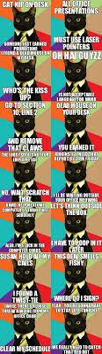 Business Cat Memes - 52 best business cat images on pinterest cat memes business cat