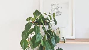 plants that don t need sunlight to grow plant house pot plants 78 cute interior and house plant potted