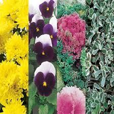 choosing ornamental plants for fall color garden club