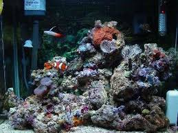 Live Rock Aquascaping Colorful Aquarium Showing Different Colorful Fishes Swimming