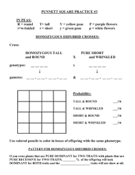 punnett square practice  with punnett square practice  in peas r  round t tall y from studylibnet
