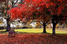autumn pictures for desktop bing images a photography idea