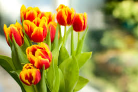 Images Of Tulip Flowers - how to save money on valentine u0027s day flowers spending us news