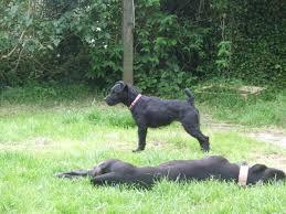 woodhaven lexus winnipeg manitoba dogs bite decatur al cleveland hartlepool england a yorkshire