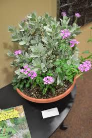 irish native plants 38 best native floral arrangements images on pinterest floral