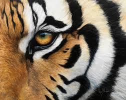 tiger eye painting by bilodeau