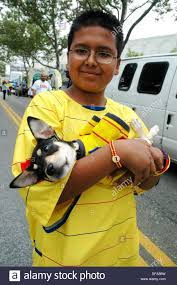 Queen S Dog New York City Usa A Boy And His Dog During The Colombian Parade