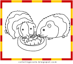 good guinea pig coloring pages 42 for free coloring kids with