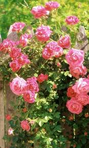 hd vintage roses wallpaper android apps on google play