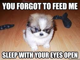 Feed Me Meme - you forgot to feed me sleep with your eyes open misc quickmeme
