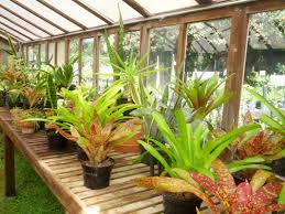 Beautiful House Plants by New Sale 20 Aloe Seeds Mix Excellent Houseplants Succulent Aloe
