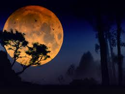 what is a strawberry moon the strawberry moon and how to grow your own strawberries wish farms