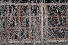 free images tree branch snow winter spiky fence wood